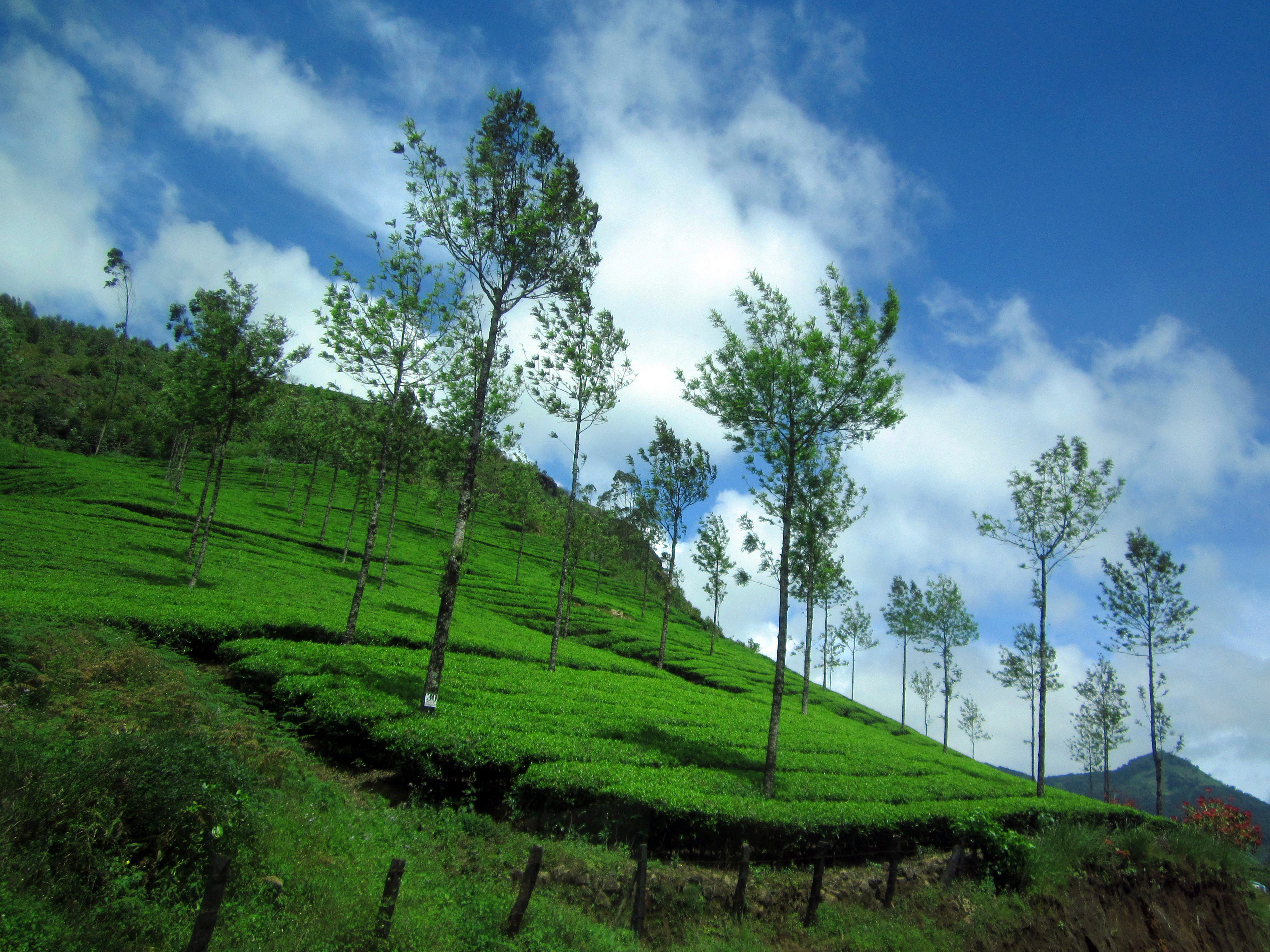 Munnar Guide Visiting Places How To Reach Things To Do