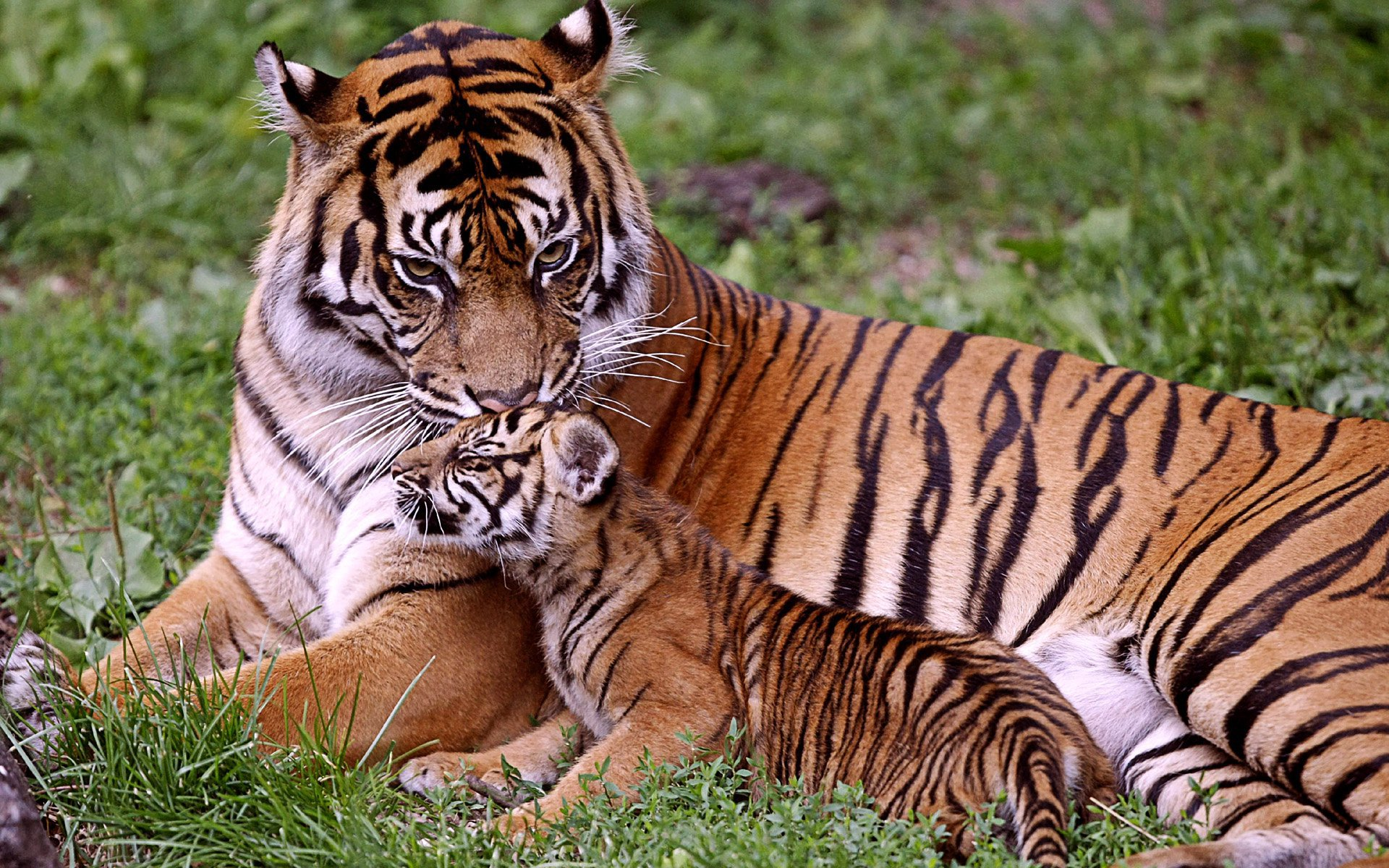 Image result for jim corbett national park