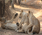 Gir National Park, wildlife India, sanctuary park India