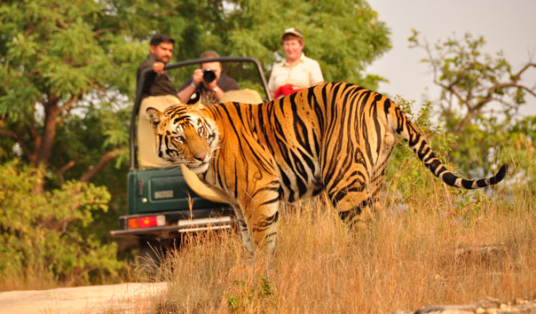 Indian Wildlife Safaris