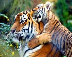 India adventure Tour, india wildlife tour