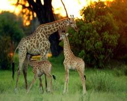 Wildlife,luxury wildlife tour