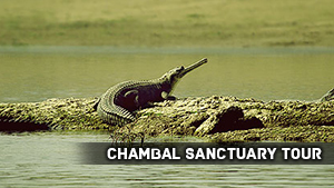 Chambal Sanctuary Tour
