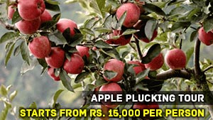 Apple Plucking Tour